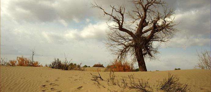 离太阳最近的树