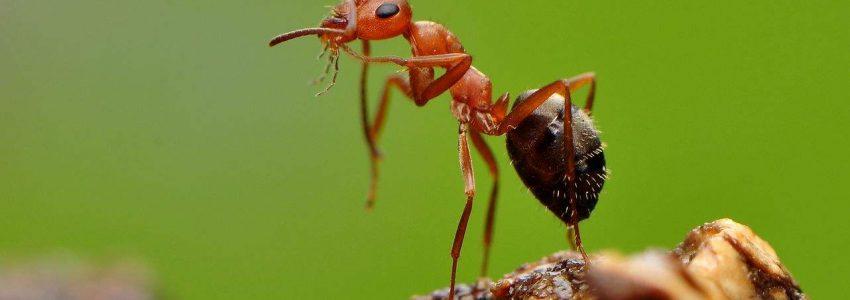 你知道吗?生病的蚂蚁会主动自我隔离